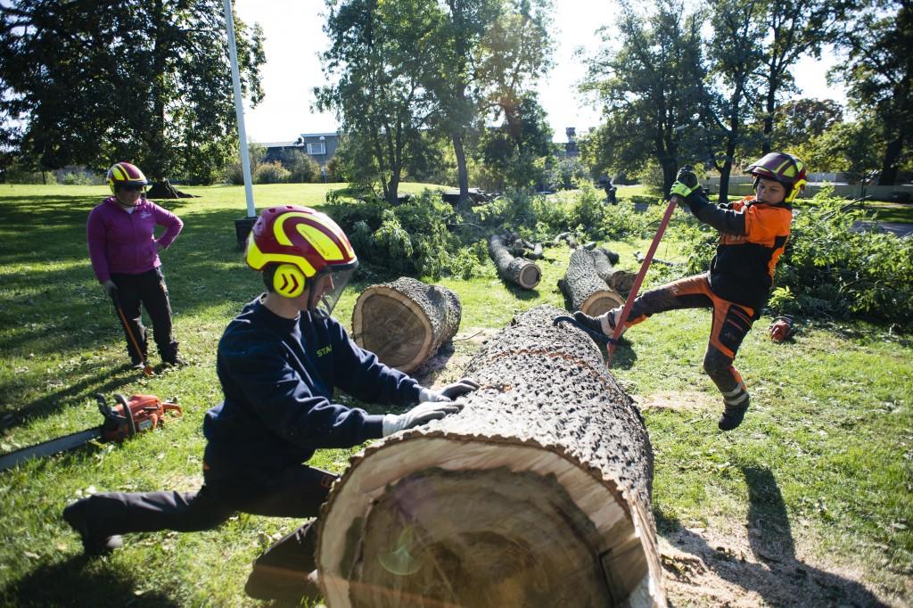 Arboristit korjaavat myrskyn jälkiä